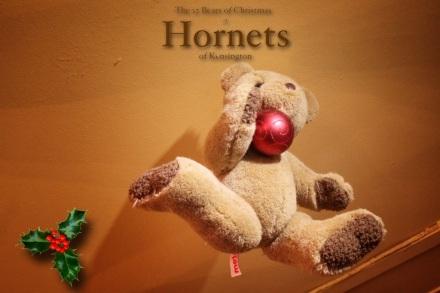 Hornets Bear - Duncan copy