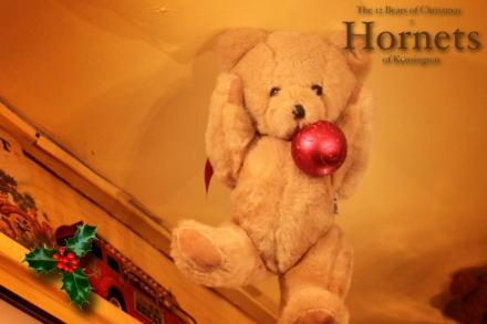 Hornets Bear - Max copy