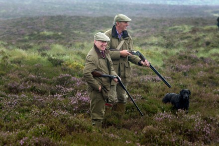 On-the-grouse-moor-at-Pitlochry.jpg